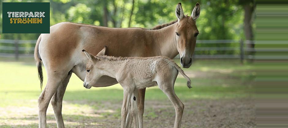 Gutschein für Jubiläumsjahr im Tierpark Ströhen – Ihre Familientageskarte zum halben Preis von Tierpark Ströhen