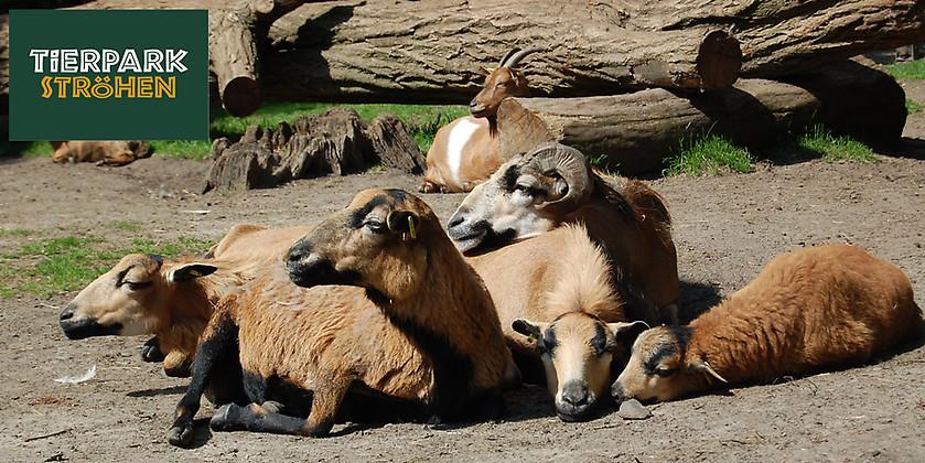 Gutschein für Jubiläumsjahr im Tierpark Ströhen – Ihre Familienjahreskarte zum halben Preis von Tierpark Ströhen
