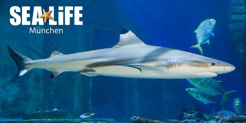 Gutschein für Das Erlebnisaquarium im Olympiapark von SEA LIFE München