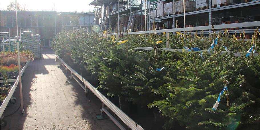 Im hagebaumarkt Paderborn finden Sie auch Tannenbäume