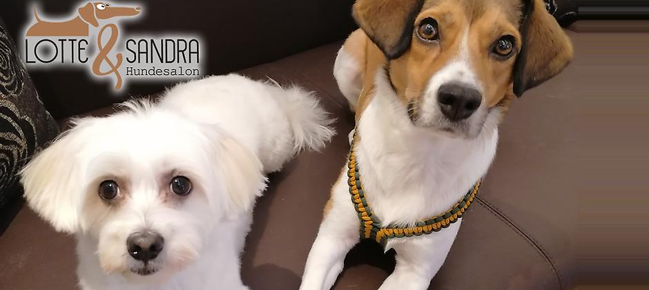 Gutschein für Waschen, Schneiden, Krallenpflege und mehr! von Hundesalon Lotte & Sandra