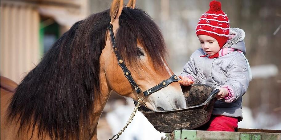 Im Rahmen der Kinderbetreuung kann erste Erfahrung im Umgang mit Pferden gesammelt werden