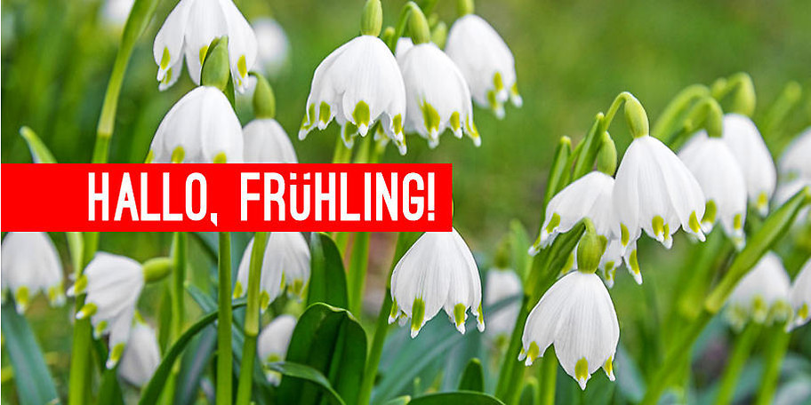 Stöbern Sie bei Blumen Haunert und finden Sie die passende Gartendekoration