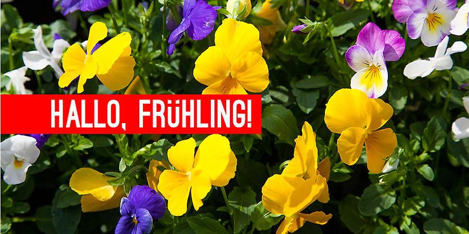 Bei Blumen Haunert finden Sie garantiert die passenden Garten- und Wohnaccessoires