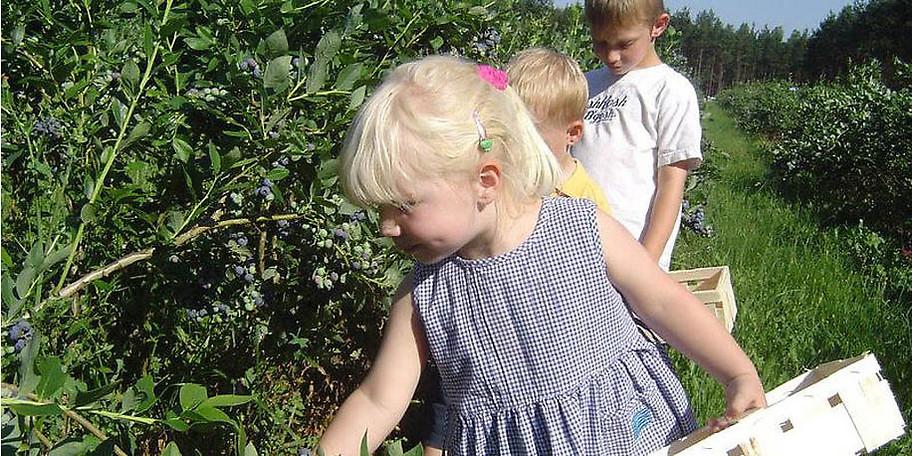 Ernten Sie unsere leckeren Erdbeeren frisch vom Feld